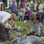 Herdwick Hand Clipping Competition